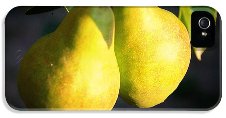 Food IPhone 5 Case featuring the photograph Backyard Garden Series - Two Pears by Carol Groenen