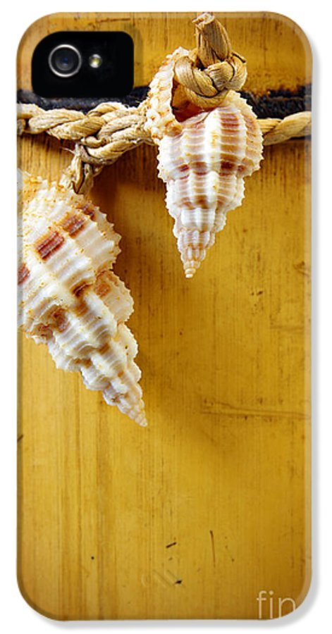 Antique IPhone 5 Case featuring the photograph Bamboo And Conches by Carlos Caetano