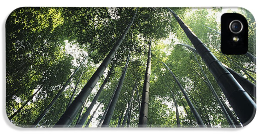 Area IPhone 5 Case featuring the photograph Bamboo Forest by Mitch Warner - Printscapes
