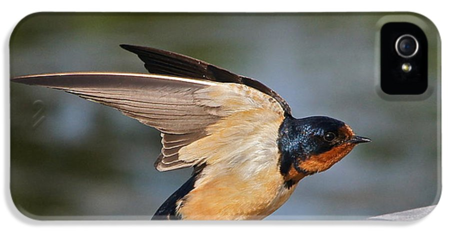 Barn Swallow IPhone 5 Case featuring the photograph Barn Swallow by Byron Varvarigos