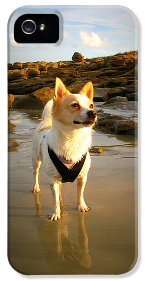 Dog IPhone 5 Case featuring the photograph Beach Boy 1 by Mandy Shupp