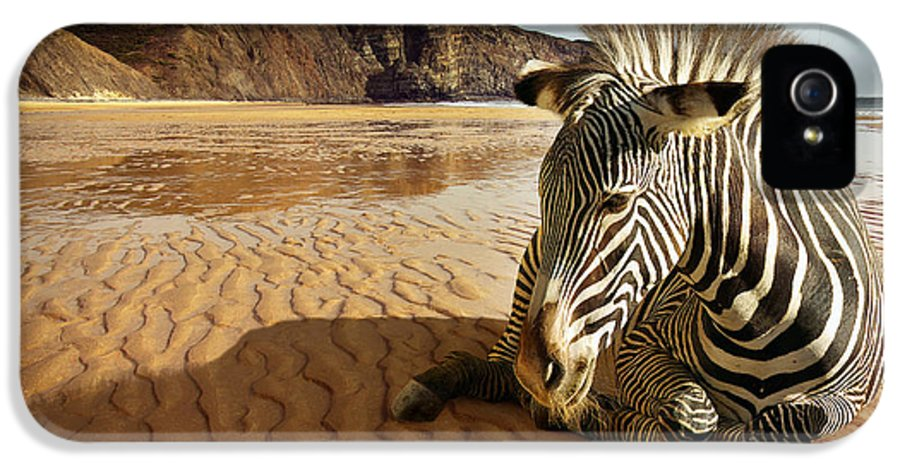 Africa IPhone 5 Case featuring the photograph Beach Zebra by Carlos Caetano