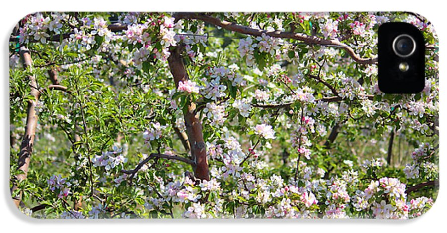 Blossoms IPhone 5 Case featuring the photograph Beautiful Blossoms - Digital Art by Carol Groenen