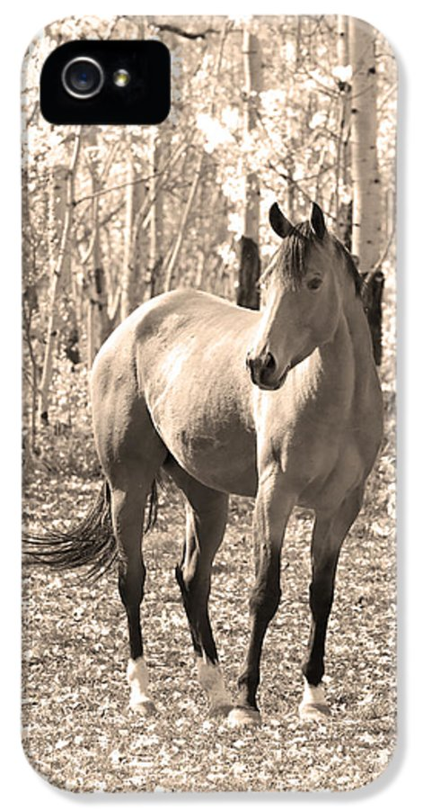 Horse IPhone 5 Case featuring the photograph Beautiful Horse In Sepia by James BO Insogna