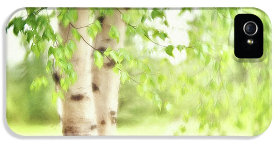 Green IPhone 5 Case featuring the photograph Birch In Spring by Priska Wettstein