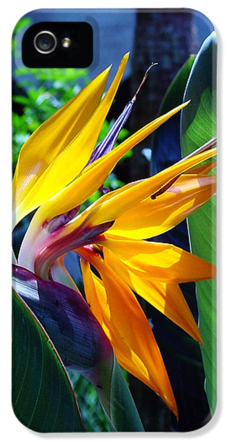 Flowers IPhone 5 Case featuring the photograph Bird Of Paradise by Susanne Van Hulst