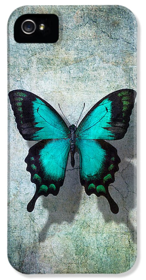 Still Life IPhone 5 Case featuring the photograph Blue Butterfly Resting by Garry Gay