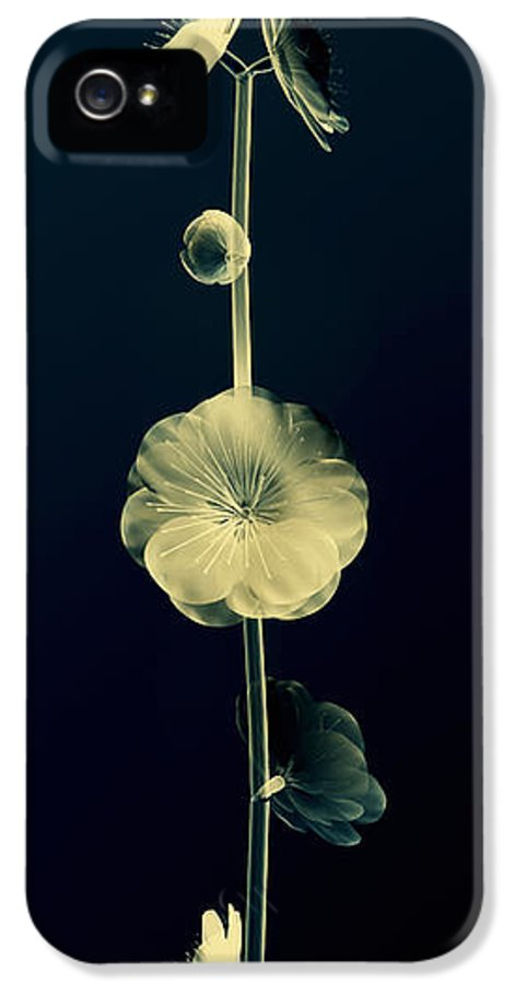 Art IPhone 5 Case featuring the digital art Botanical Study 6 by Brian Drake - Printscapes