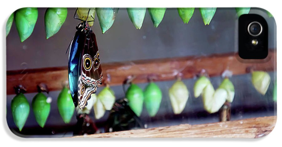 Butterfly Chrysalis IPhone 5 Case featuring the photograph Butterfly With Butterfly Chrysalis 1 by Andee Design