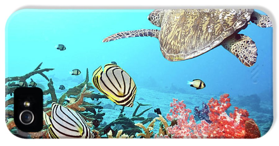 Butterflyfish IPhone 5 Case featuring the photograph Butterflyfishes And Turtle by MotHaiBaPhoto Prints