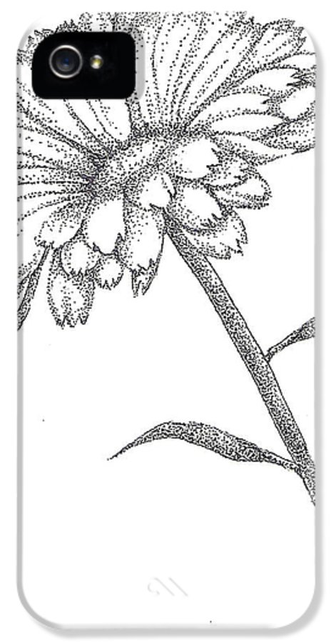 Calendula IPhone 5 / 5s Case featuring the drawing Calendula by Christy Beckwith