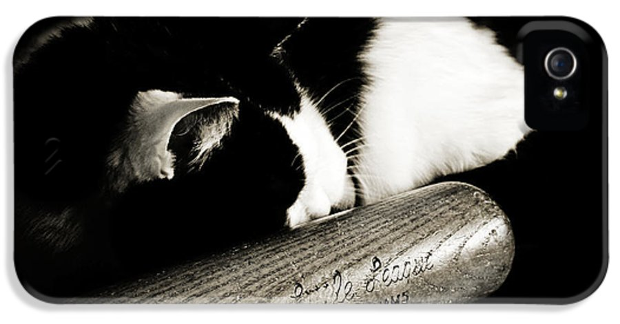 Fine Art Cat IPhone 5 Case featuring the photograph Cat And Bat by Andee Design