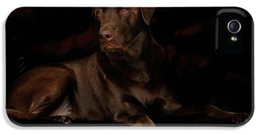 Labrador Dog IPhone 5 Case featuring the photograph Chocolate Lab Dog by Christine Till