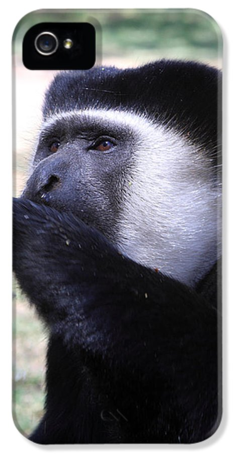 Colobus IPhone 5 Case featuring the photograph Colobus Monkey by Aidan Moran