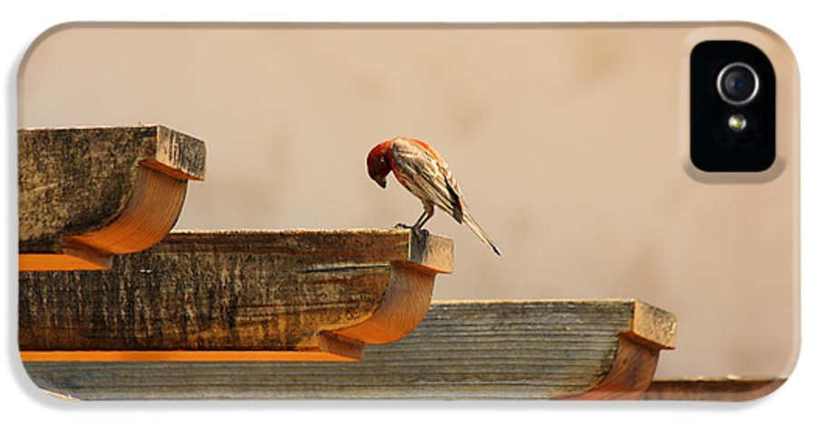 Bird IPhone 5 Case featuring the photograph Contemplation by Rebecca Cozart