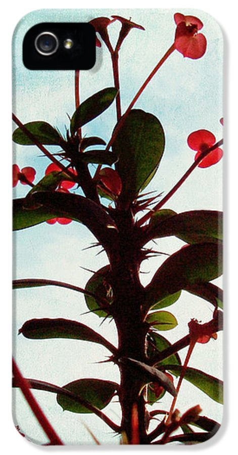 Crown Of Thorns IPhone 5 Case featuring the photograph Crown Of Thorns by Shawna Rowe