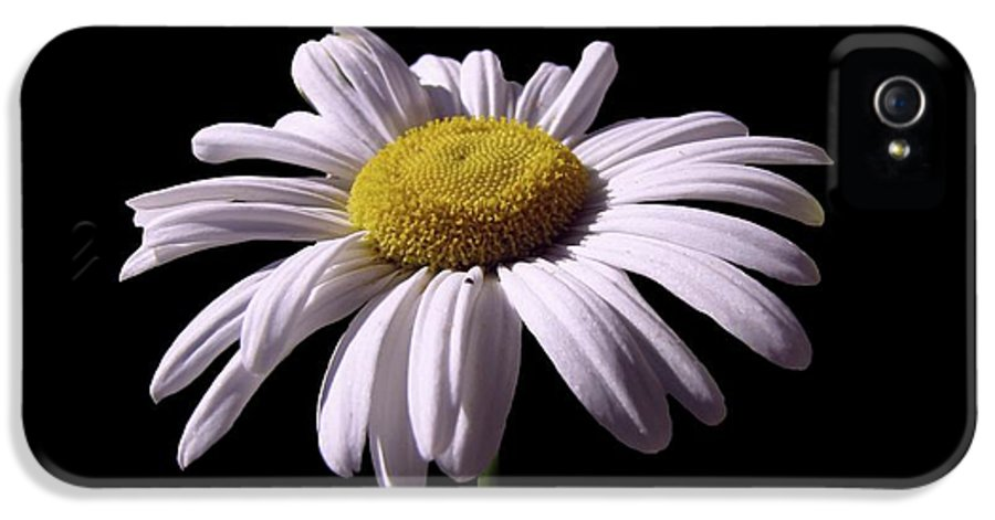 Daisy IPhone 5 Case featuring the photograph Daisy by David Dehner