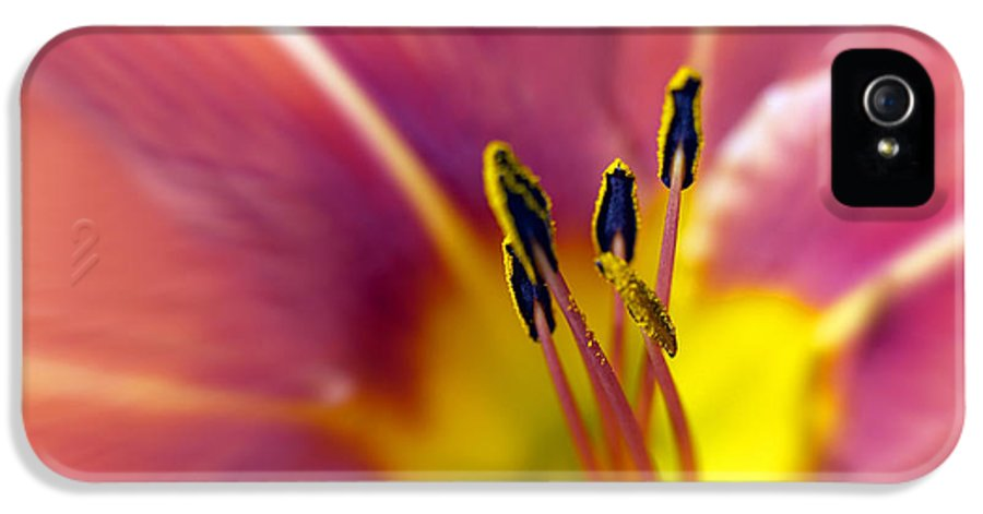 Easter Lily Lilium Lily Flowers Flower Floral Bloom Blossom Blooming Garden Nature Plant Petals Plants Grow Species Garden One Single 1 Petals Close-up Close Up Cultivate Botanical Botany Nature IPhone 5 Case featuring the photograph Easter Lily 3 by Tony Cordoza