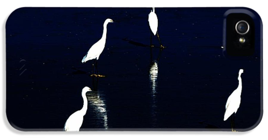 Sea Birds IPhone 5 Case featuring the digital art Egret Reflections by David Lane