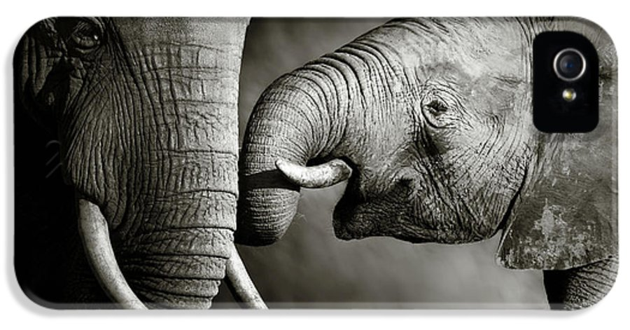 Elephant; Interact; Touch; Gently; Trunk; Young; Large; Small; Big; Tusk; Together; Togetherness; Passionate; Affectionate; Behavior; Art; Artistic; Black; White; B&w; Monochrome; Image; African; Animal; Wildlife; Wild; Mammal; Animal; Two; Moody; Outdoor; Nature; Africa; Nobody; Photograph; Addo; National; Park; Loxodonta; Africana; Muddy; Caring; Passion; Affection; Show; Display; Reach IPhone 5 Case featuring the photograph Elephant Affection by Johan Swanepoel