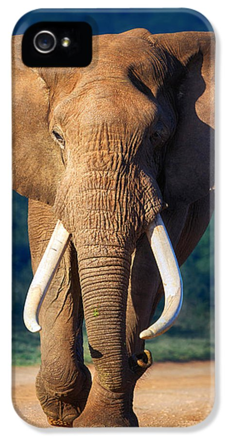 Elephant IPhone 5 Case featuring the photograph Elephant Approaching by Johan Swanepoel