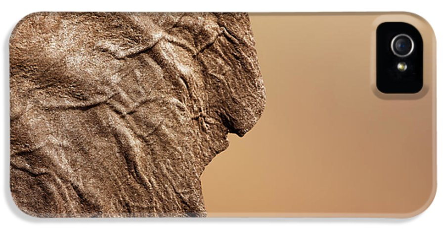 Texture IPhone 5 Case featuring the photograph Elephant Ear Close-up by Johan Swanepoel