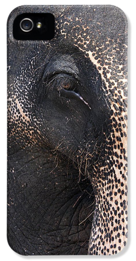 Aged IPhone 5 Case featuring the photograph Elephant by Jane Rix