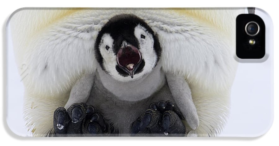 Fn IPhone 5 Case featuring the photograph Emperor Penguin Aptenodytes Forsteri by Rob Reijnen