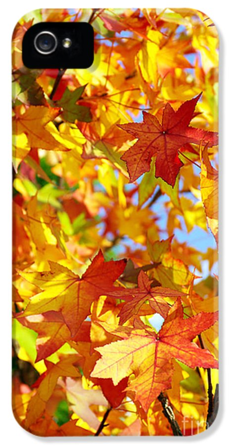 Autumn IPhone 5 Case featuring the photograph Fall Leaves Background by Carlos Caetano
