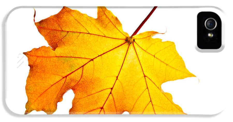 Leaf IPhone 5 Case featuring the photograph Fall Maple Leaf by Elena Elisseeva