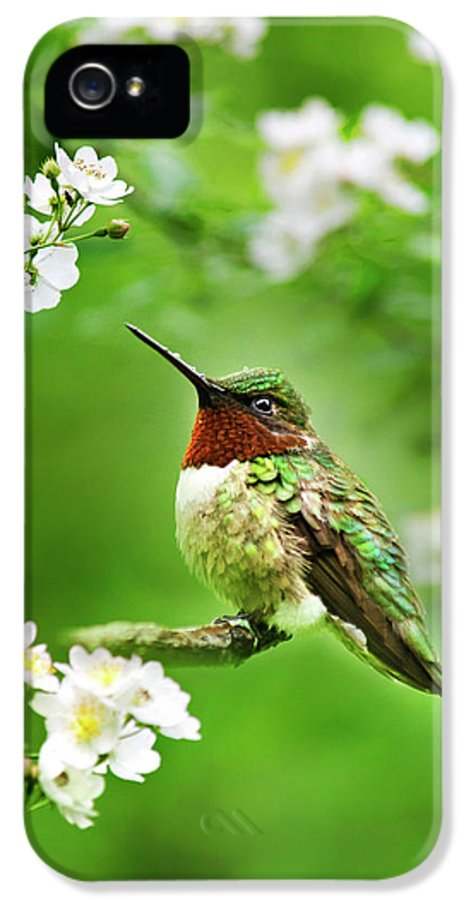 Hummingbird IPhone 5 Case featuring the photograph Fauna And Flora - Hummingbird With Flowers by Christina Rollo