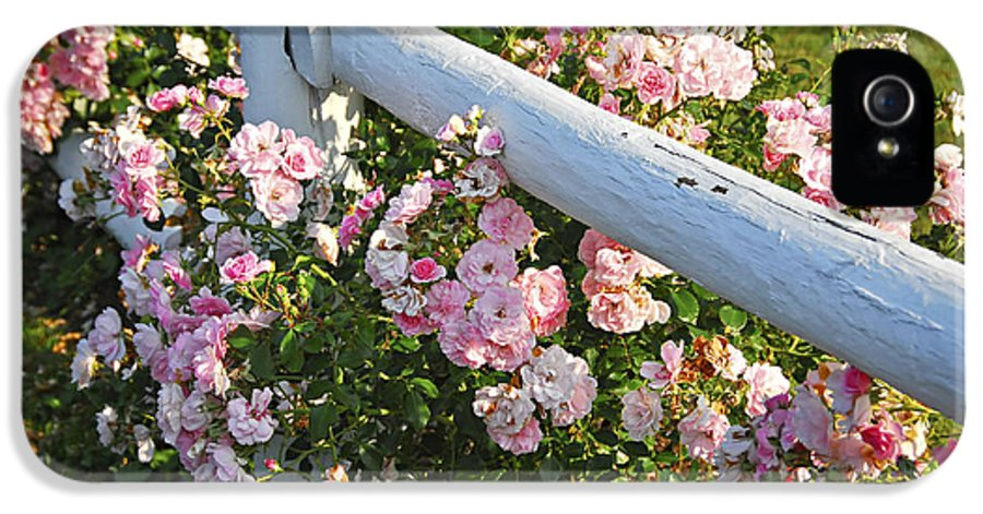 Rose IPhone 5 / 5s Case featuring the photograph Fence With Pink Roses by Elena Elisseeva