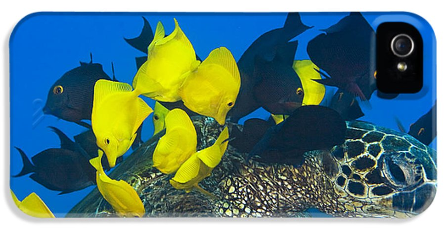 Algae IPhone 5 Case featuring the photograph Fish Cleaning Turtle by Dave Fleetham - Printscapes