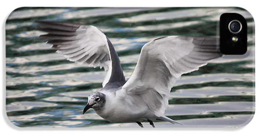 Flying Seagull IPhone 5 Case featuring the photograph Flying Seagull by Carol Groenen
