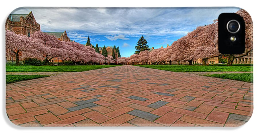 University Of Washington IPhone 5 Case featuring the photograph Full Bloom by Dan Mihai