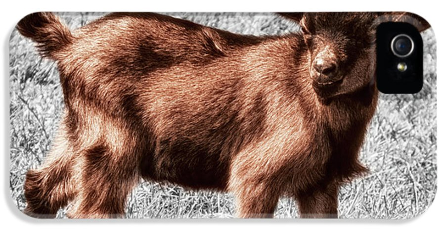 Goat IPhone 5 Case featuring the photograph Gizmo by Wim Lanclus