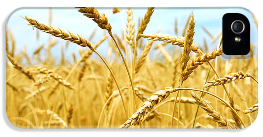 Wheat IPhone 5 Case featuring the photograph Grain Field by Elena Elisseeva