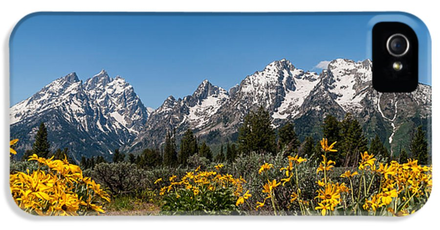 Grand Tetons IPhone 5 Case featuring the photograph Grand Teton Arrow Leaf Balsamroot by Brian Harig