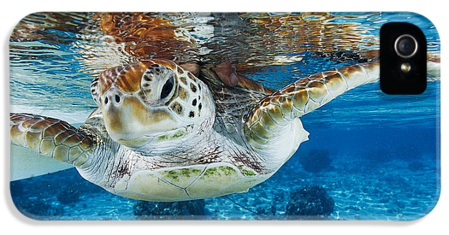 Green Turtle IPhone 5 Case featuring the photograph Green Turtle by Alexis Rosenfeld