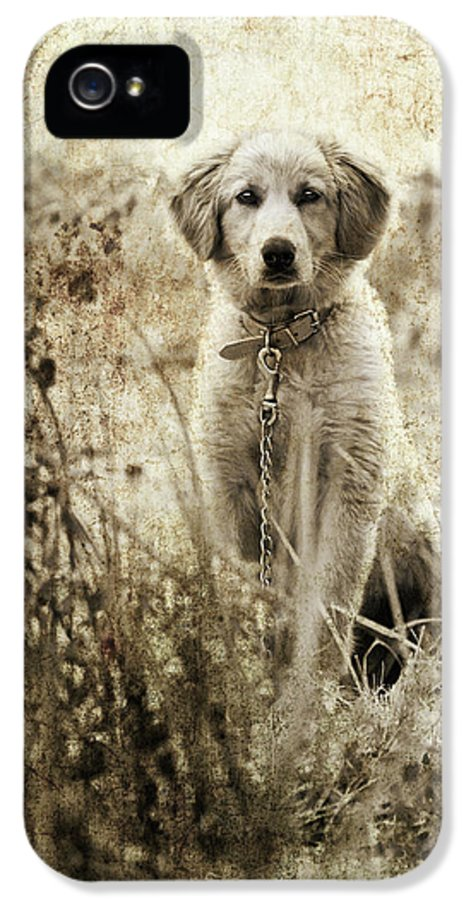 IPhone 5 Case featuring the photograph Grunge Puppy by Meirion Matthias