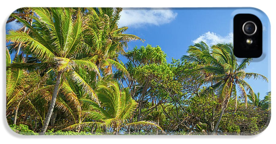 America IPhone 5 Case featuring the photograph Hana Palm Tree Grove by Inge Johnsson