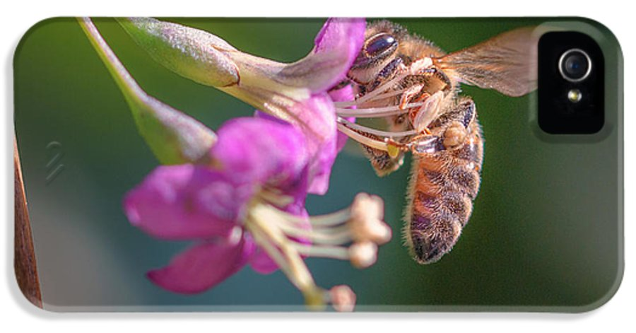 Honey Bee On Goji Berry Flower Iphone 5 Case For Sale By Jivko Nakev
