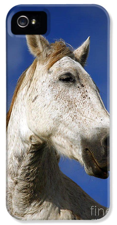 Animals IPhone 5 Case featuring the photograph Horse Portrait by Gaspar Avila