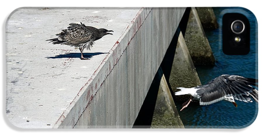 Birds IPhone 5 Case featuring the photograph Hurry Back Mum by Aidan Moran