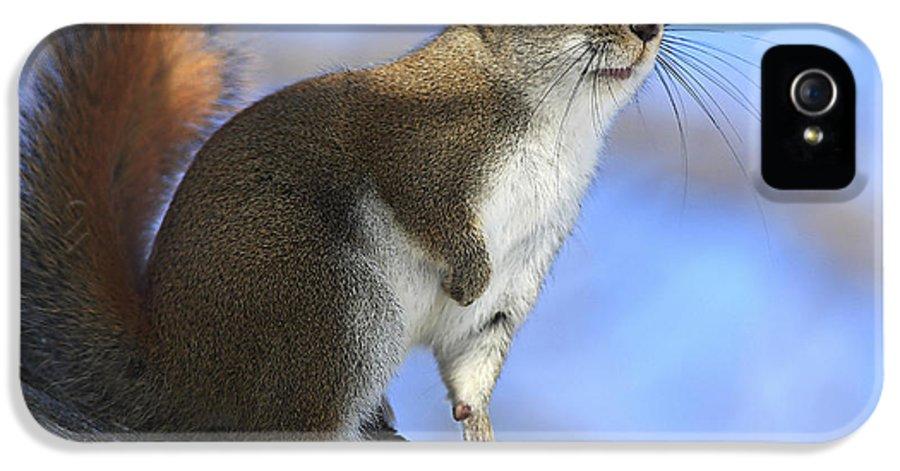 Animal IPhone 5 Case featuring the photograph I See Sun by Deborah Benoit