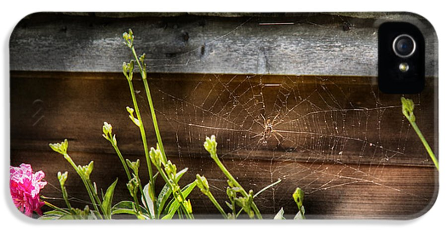 Suburbanscenes IPhone 5 Case featuring the photograph Insect - Spider - Charlottes Web by Mike Savad