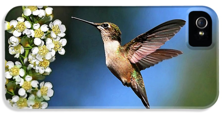 Hummingbird IPhone 5 Case featuring the photograph Just Looking by Christina Rollo