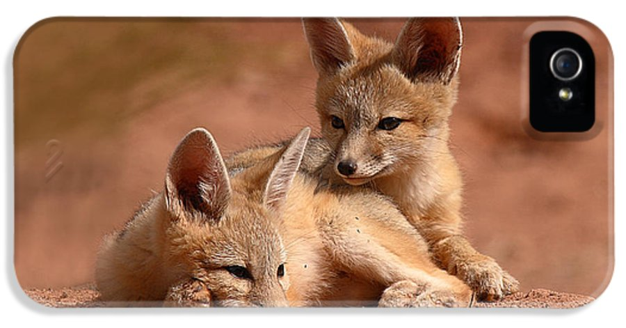 Fox IPhone 5 Case featuring the photograph Kit Fox Pups On A Lazy Day by Max Allen