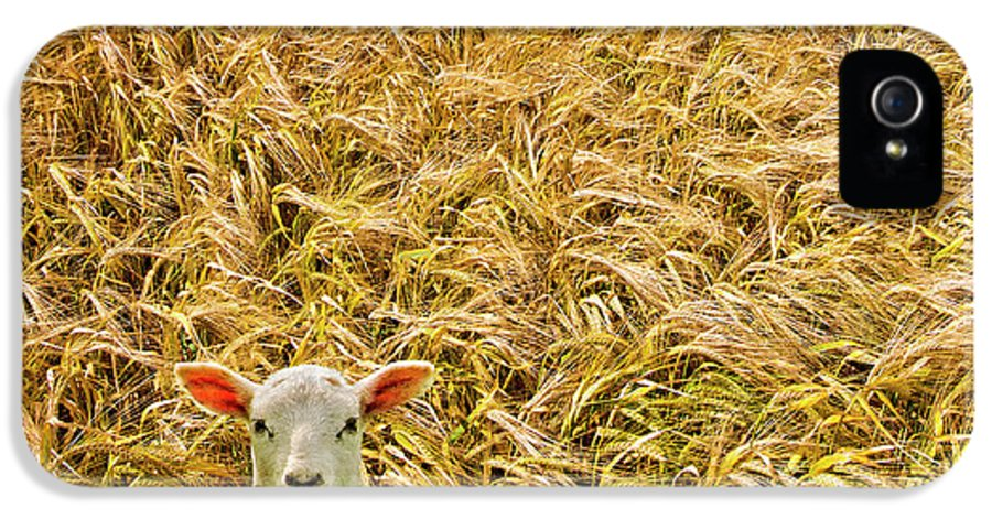 Sheep IPhone 5 Case featuring the photograph Lamb With Barley by Meirion Matthias