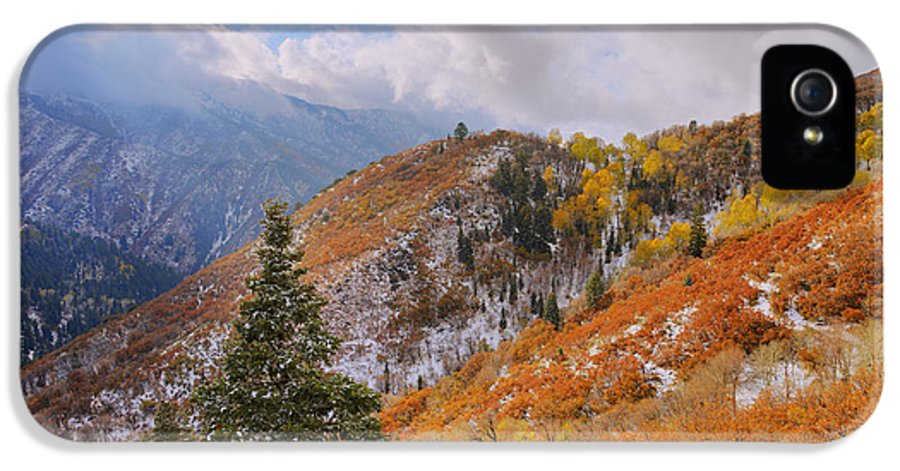 Forest IPhone 5 Case featuring the photograph Last Fall by Chad Dutson